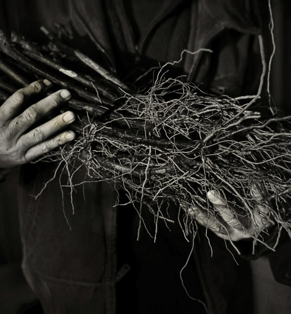 Caldwell Vineyard canes Black White with Hands
