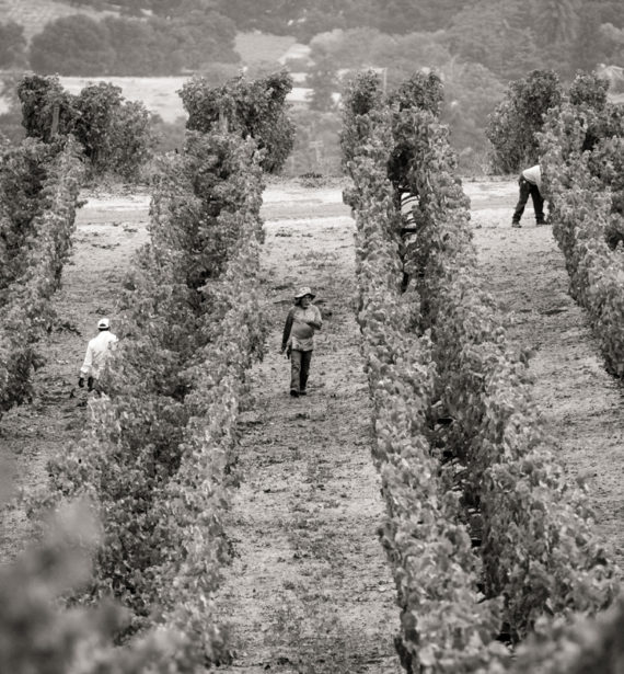 BW_Vineayrd_Workers_79454_07.17 Caldwell ©SuzanneBeckerBronk